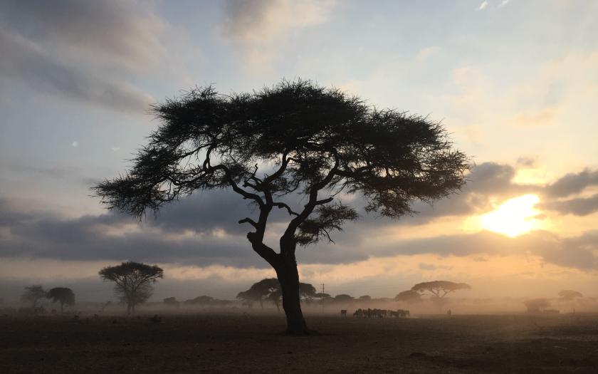 Akasya Ağacının Hikayesi